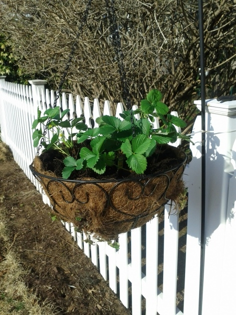Best Hanging Strawberry Planter Photo