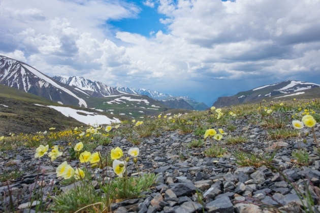 Best Images Of Tundra Plants Image