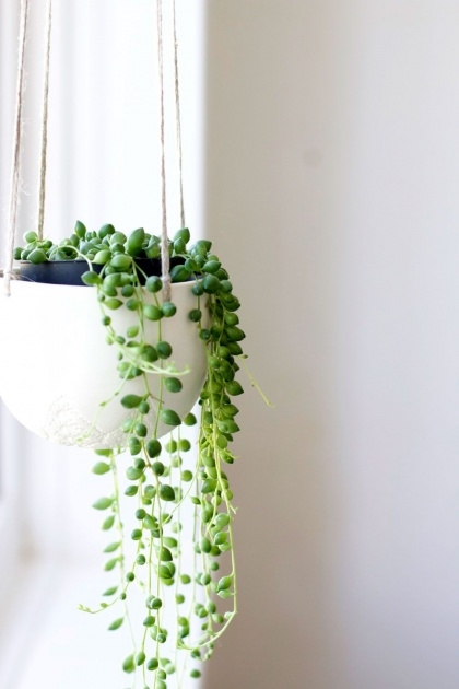Best Indoor Hanging Plants Photo