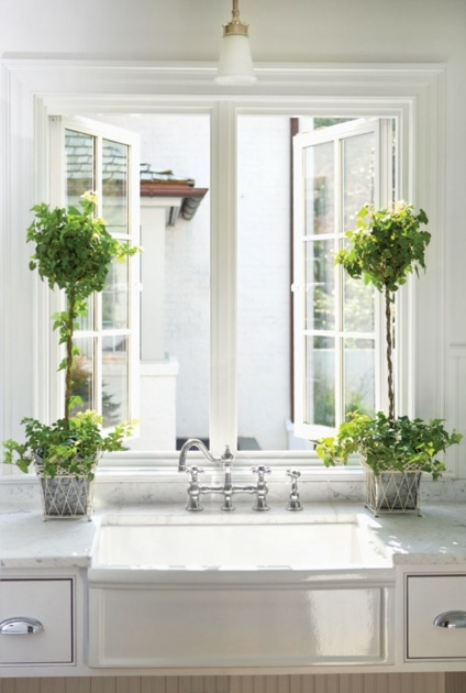 Best Kitchen Window Plants Photo