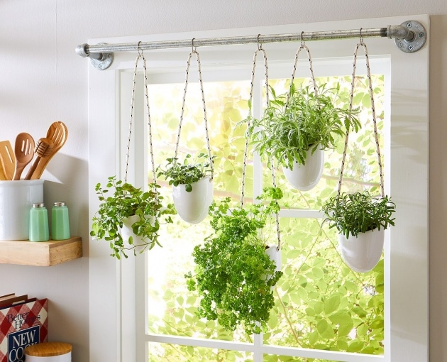 Best Kitchen Window Plants Picture