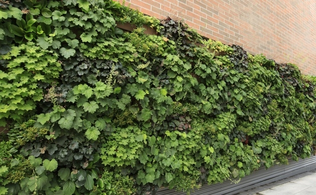 Best Living Wall Panel Outdoor Planter Picture