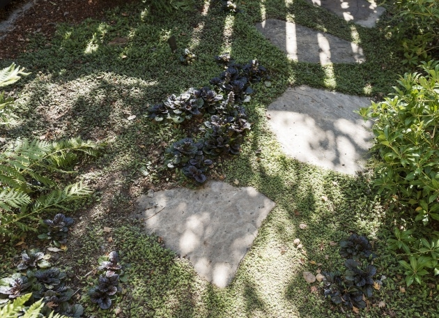 Best Low Profile Ground Cover For Between Pavers Photo