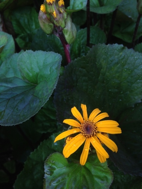 Best Plant Has Yellow Flowers And A Purple Stem Photo