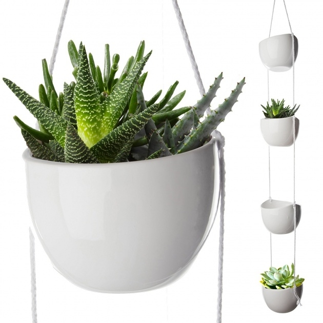 Best Planters For Indoor Plants Image