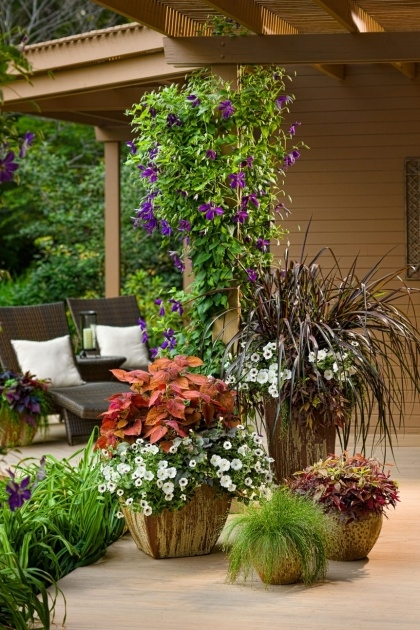 Best Plants For Planters In Shade Image