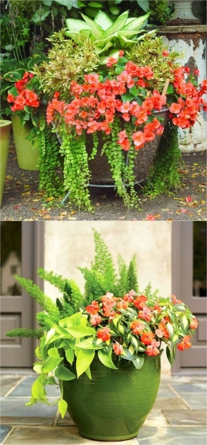 Best Plants For Planters In Shade Picture