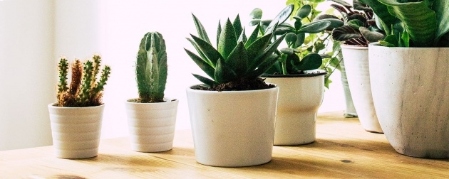 Best Plants For Small Spaces Picture
