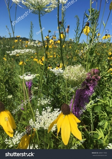 Best Prairie Flowers For Wisconsin Picture