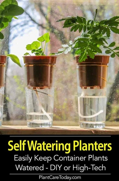 Best Self Watering Planters Image