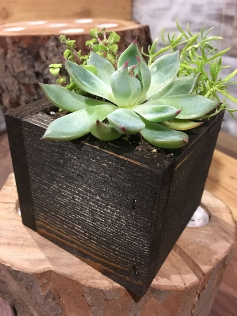 Best Succulent Planter Box Photo