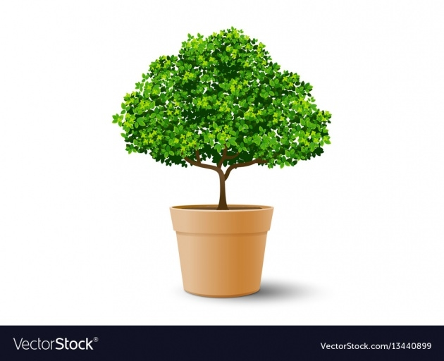 Best Tree Plant Pot Image
