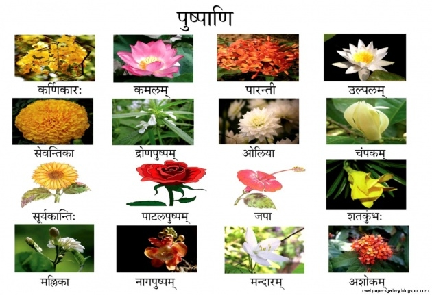Best Types Of Flowers In Hindi Image