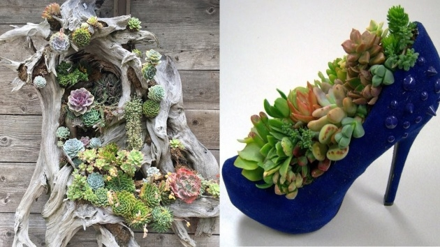 Best Unique Succulent Planters Image