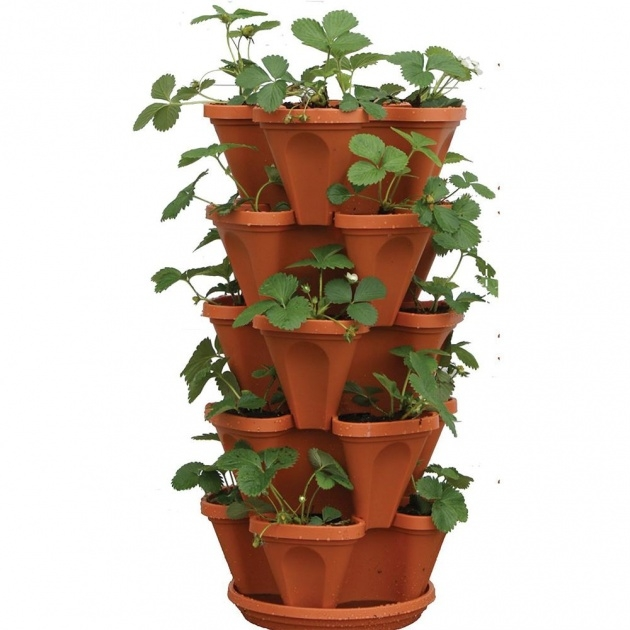 Best Vertical Strawberry Planter Picture