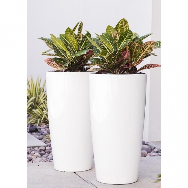 Best White Plant Pots Photo