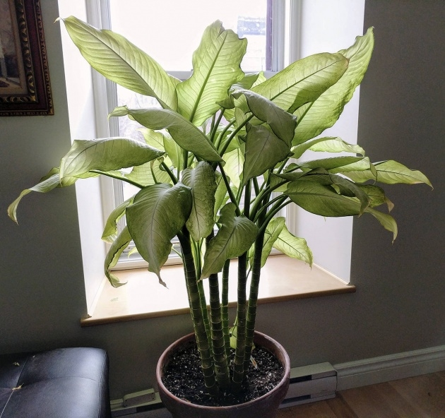 Cool Common House Plants Image