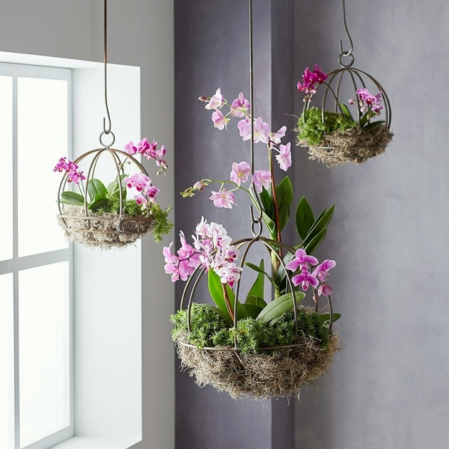 Cool Hooks For Hanging Plants Photo