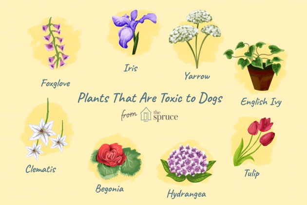 Cool Outdoor Plants Healthy For Dogs Image