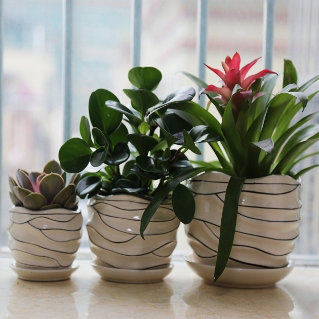 Cool Plant Pot Sizes Photo