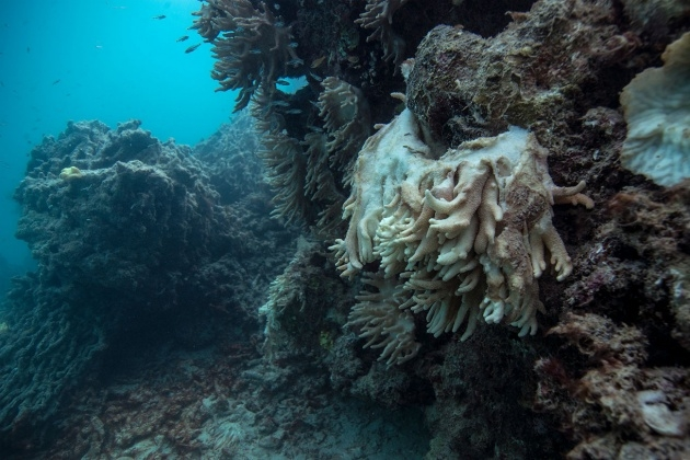 Cool The Great Barrier Reefs Plants Photo