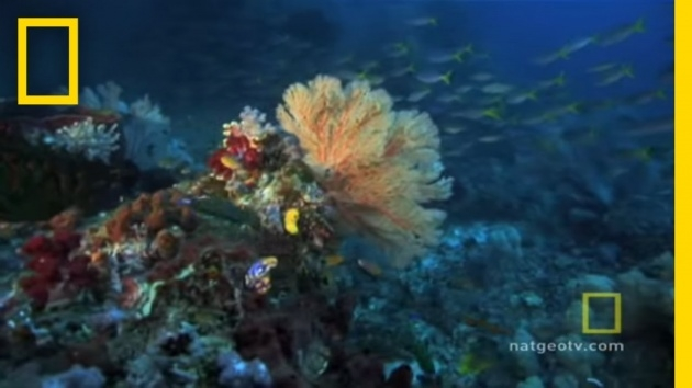 Cool The Great Barrier Reefs Plants Picture