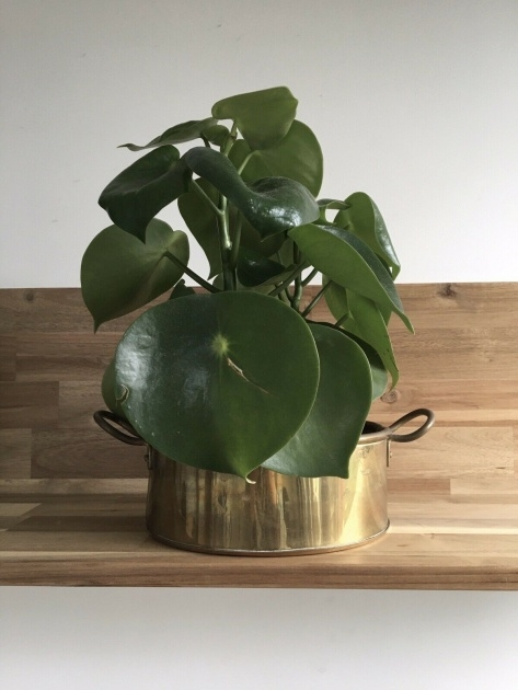 Creative Brass Plant Pot Picture