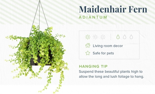 Creative Cheap Hanging Plants Image