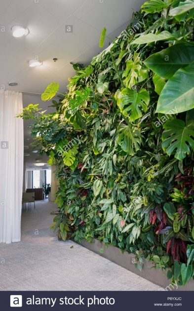 Creative Green Wall Plants Image
