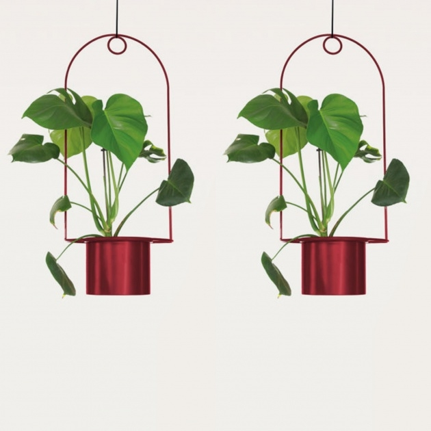 Creative Hanging Plant Stand Photo