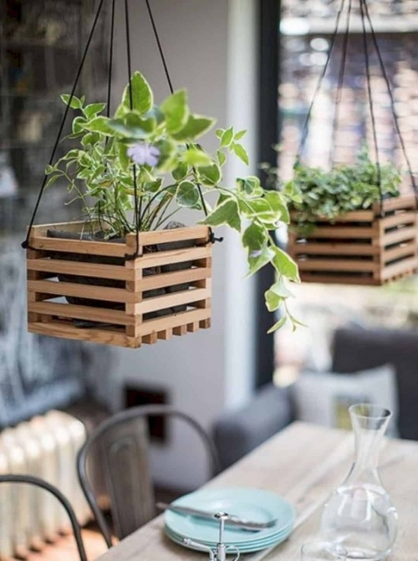 Creative Hanging Plants Ideas Image
