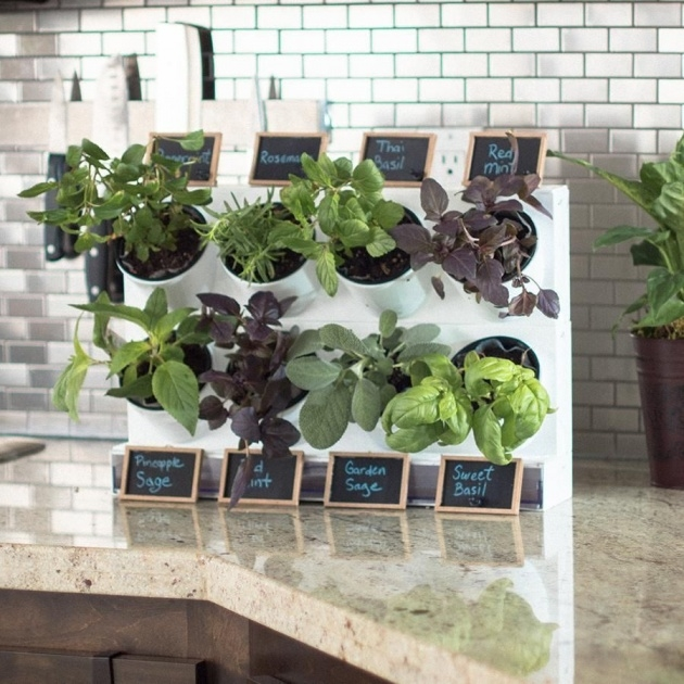 Creative Herb Planter Ideas Image
