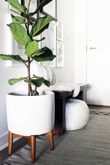 Creative Large Indoor Plant Pots Image