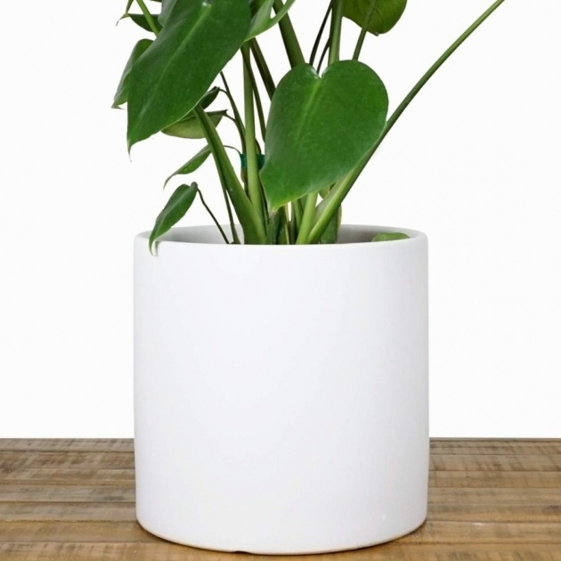 Creative Modern Plant Pot Picture