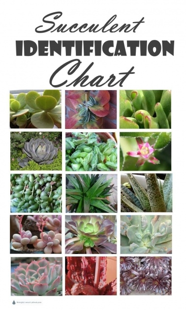Creative Plant Identification And Names Image