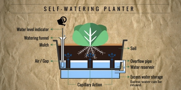 Creative Planter With Water Reservoir Image