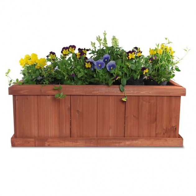 Creative Plants For Planter Boxes Photo