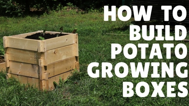 Creative Potato Planter Box Picture