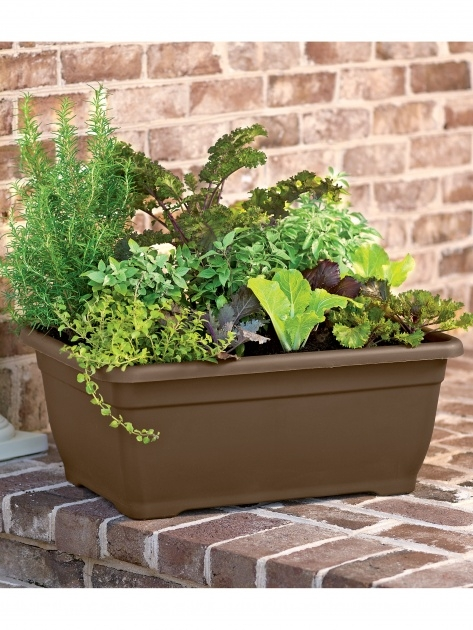 Creative Self Watering Patio Planters Image