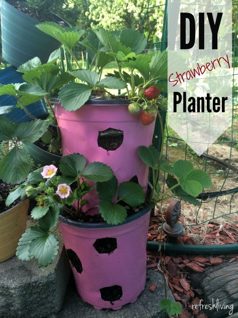 Creative Self Watering Strawberry Planter Image