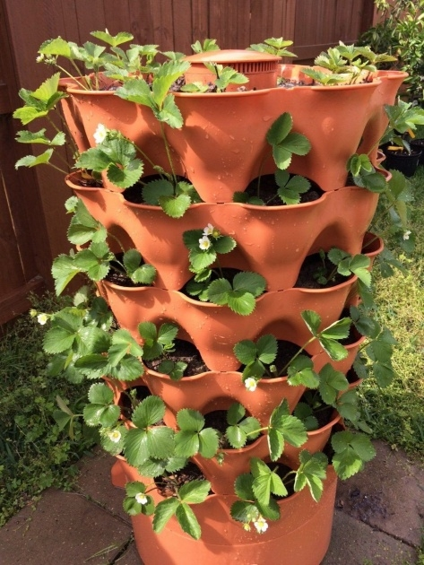 Creative Strawberry Tower Planter Photo