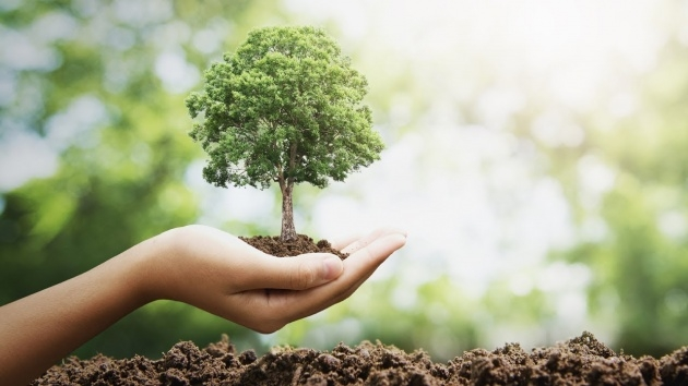 Creative Tree Planting Picture