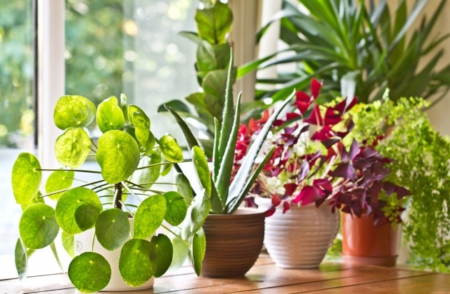 Creative Type Of House Plants Photo