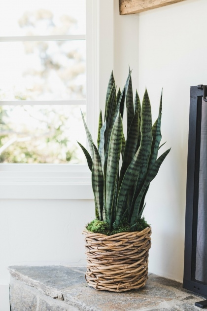 Creative Woven Plant Basket Photo