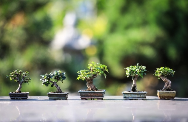 Easy Bonsai Tree Plant Image