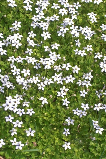 Easy Ground Cover Plants Image