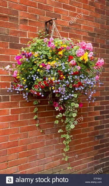 Easy Hanging Basket Foiliage Picture