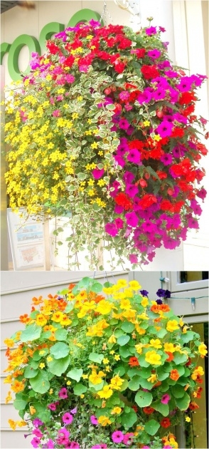 Easy Hanging Flower Plants Image