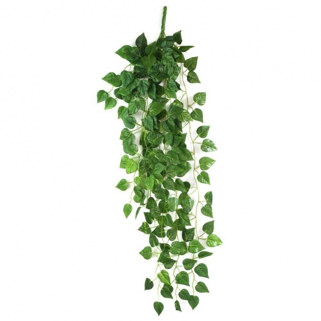 Easy Hanging Vine Plants Picture