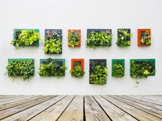 Easy How To Make A Plant Wall Photo